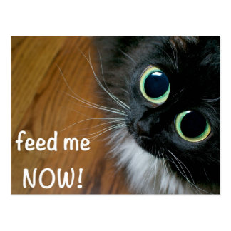 feed me NOW! Postcard