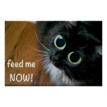 feed me NOW! Poster