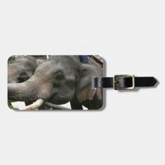 Feeding Asian Elephants Bananas in Thailand! Bag Tags