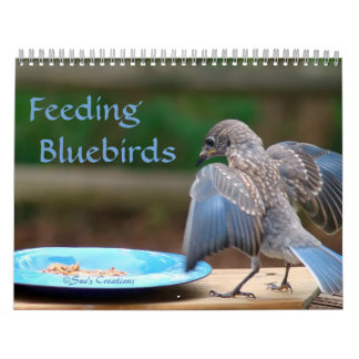 Feeding Bluebirds Calendar
