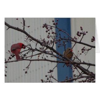 Feeding Cardinals, Happy Anniversary Card
