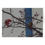 Feeding Cardinals, Happy Anniversary Greeting Card