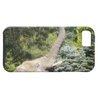 Feeding Elephant iPhone 5 case