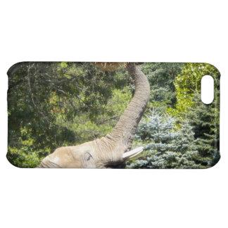 Feeding Elephant iPhone 5c case