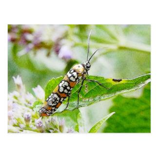 Feeding – Ermine Moth on Agastache Postcard