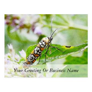 Feeding – Ermine Moth on Agastache Postcards
