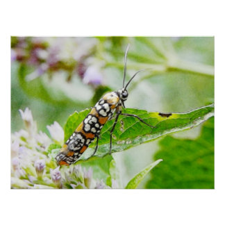Feeding – Ermine Moth on Agastache Print