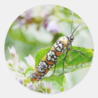 Feeding – Ermine Moth on Agastache Classic Round Sticker