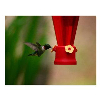 Feeding Humingbird Postcard
