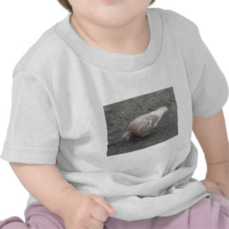 Feeding Pigeon Tee Shirt