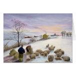 Feeding sheep in winter card