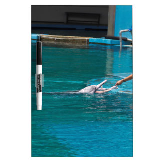 Feeding the dolphins as part of Dolphin show Dry Erase Boards