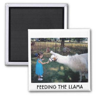 FEEDING THE LLAMA 2 INCH SQUARE MAGNET