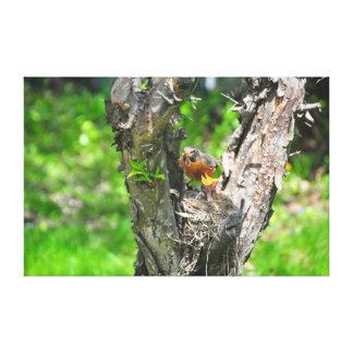 feeding time in robin nest canvas print