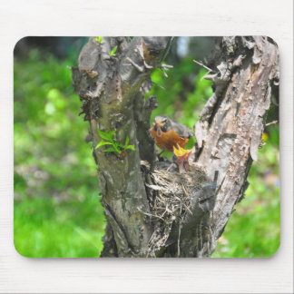 Feeding time in robin nest mouse pad