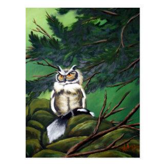Feeding Time Owl Postcard