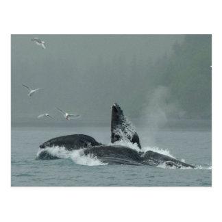 Feeding Whales Postcard