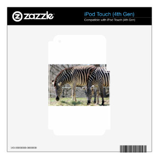 Feeding Zebras Decal For iPod Touch 4G