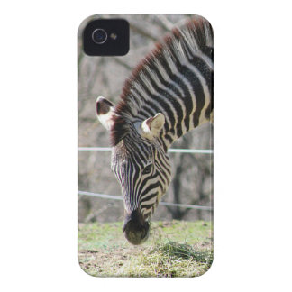 Feeding Zebras iPhone 4 Case