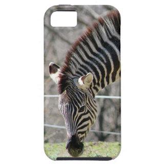 Feeding Zebras iPhone SE/5/5s Case