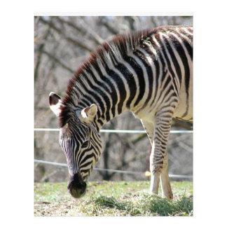 Feeding Zebras Letterhead