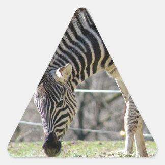 Feeding Zebras Triangle Sticker