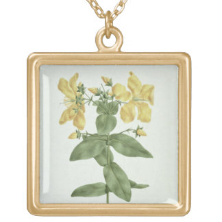 Feel-Fetch (Hypericum quartinianum) (w/c over grap Gold Plated Necklace