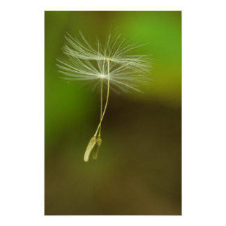 Feel free - flying Dandelion seeds Poster