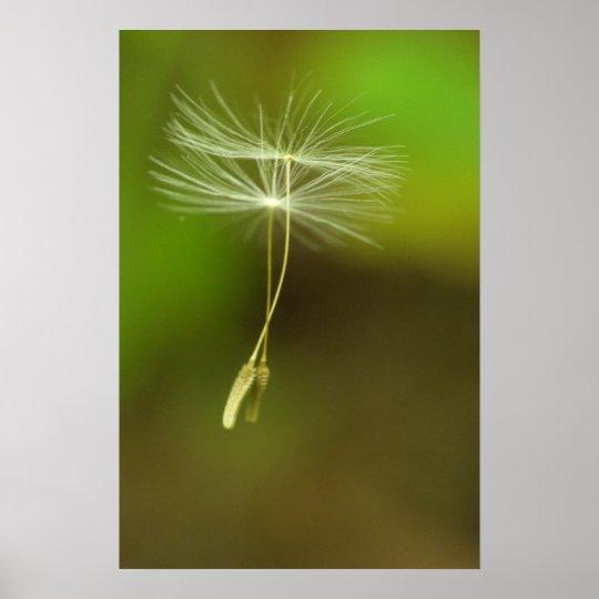 Feel free - flying Dandelion seeds Poster