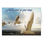 Feel the wind on your wings... cards
