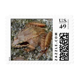Feeling Froggy II Postage Stamps