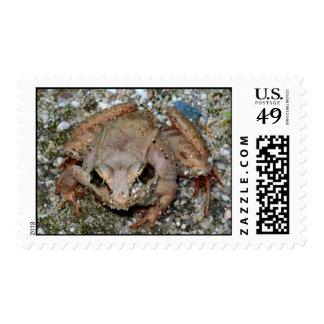 Feeling Froggy III Postage Stamp