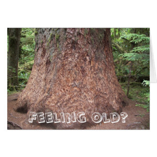 Feeling Old as a Tree Photo Funny Birthday Card