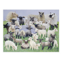 Feeling Sheepish Postcard