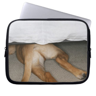 Feet and tail of yellow lab dog hidden under bed laptop computer sleeve