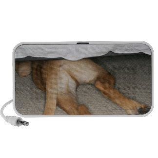 Feet and tail of yellow lab dog hidden under bed portable speaker