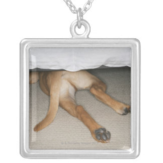 Feet and tail of yellow lab dog hidden under bed silver plated necklace