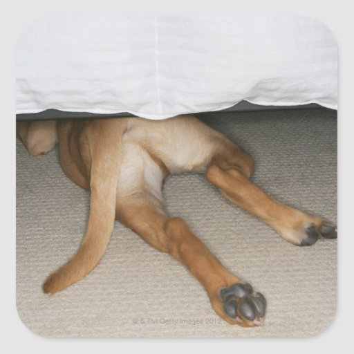 Feet and tail of yellow lab dog hidden under bed stickers