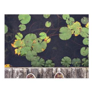 Feet at lily pad pond postcard