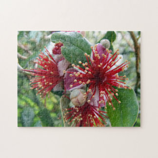 Feijoa Blossoms Jigsaw Puzzle