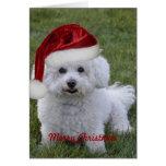 Felices Navidad de Bichon Tarjeta De Felicitación