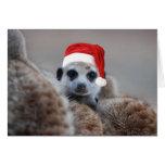 Felices Navidad de Meerkat - saludos 2 de las esta Tarjetón