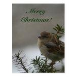 ¡Felices Navidad!  ¡Gorrión! Postal