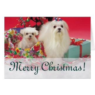 Felices Navidad maltesas Tarjetas