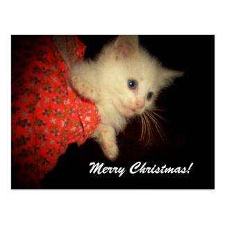 ¡Felices Navidad! Postal del gatito