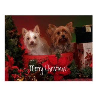 Felices Navidad Yorkie Postales