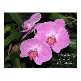 Felicidades dia de las Madres Postcard