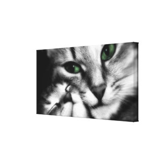 Feline Affection Gallery Wrapped Canvas