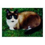 Feline Beauty Business Card Template
