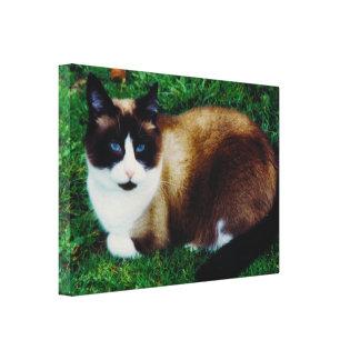 Feline Beauty Gallery Wrapped Canvas